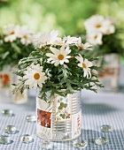 Daisies in a tin can with glass beans