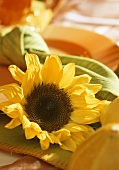 A sunflower as a table decoration