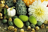 Still life with ornamental cucumbers and ornamental gourds