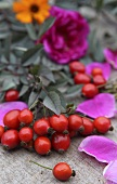 Rosehips and autumnal flowers