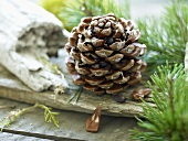 A pine cone on a wooden surface