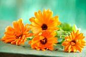 Yellow edible flowers