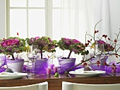 Laid table with purple tulle, ornamental cabbage & rose hips