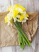 Narcissi on paper