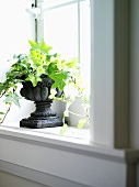 Ivy in a stone planter on a window sill
