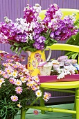 Jasmine flowers and cup-cakes on a chair