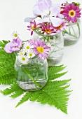 Gläser mit Farn, Geranien, Chrysanthemen