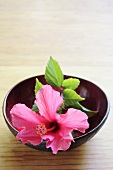 Pink hibiscus flower (Hibiscus rosa-sinensis) in a dish