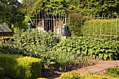 An organic vegetable garden (England)