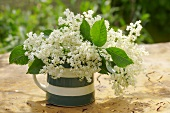 Elderflowers in a small jug out of doors