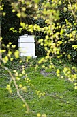 A bee hive in a garden