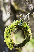 A wreath of cowslip, ilex and moss on a tree branch