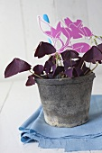 Red lucky clover in plant pot with decoration