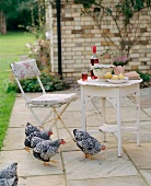 Chickens on terrace, pears and wine on a patio table