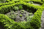 Herb garden with box-tree hedge