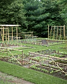 Growing vegetables, salad & flowers with plant supports