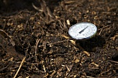 Thermometer in Manure
