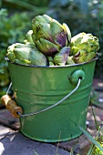 Artichokes in a Green Pail; Outdoors