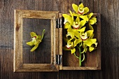 Yellow Orchids in Wooden Shadow Box