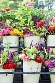 Sommerliche Blumensträusse in Eimern auf dem Markt