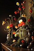 Various different coloured poppies and an antique jug against in front of dark background