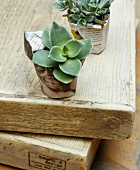 A succulent plant in a pot wrapped in paper on wooden board
