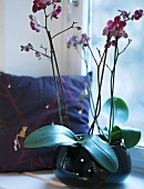 Rose orchids in a round vase and pillows