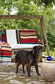 A dog in front of a swing chair with an ethnic blanket on a natural stone terrace