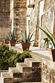 Agave plants in clay pots on a narrow path in front of a natural stone facade and stairs