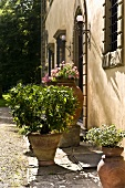 Planters in front of the facade of a Mediterranean house