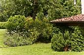 Mediterranean garden with flowering bushes