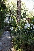 Pathway made of natural stone through a tropical garden with steps to a country home