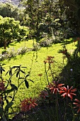 Tropical landscape -- red flowers in the shadows and grassy area in the sunlight