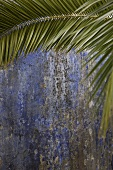 Palm branch in front of a weathered, blue house facade