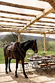 A saddled horse on a terrace under a pergola in front of a set table