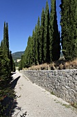 Blue sky above a Mediterranean landscape --cypress tree alley