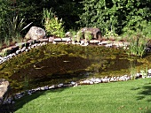 Pond with pebble stone edging and aquatic plants in a garden