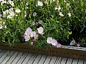 Inscribed flower bed edging and blooming flowers