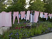 Art in action -- pink laundry on a clothesline in the garden