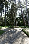 Gravel path in a garden with old trees