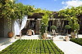 Low border and planters in front of the terrace of a Mediterranean villa