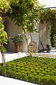 Low border with topiary cubes in front of the corner of a house with planters