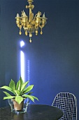 Brass chandelier in front of a blue wall and a cactus plant on a wooden table