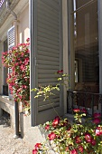 The open shutter of a patio window and flowers in front of a house
