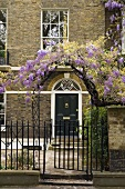 Garden gate with purple flowered vine in front of a townhouse with a brick facade