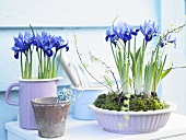 A jug and bowl planted with purple irises on a shelf outdoors
