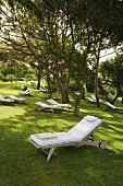 Relaxation in a shady garden - a lounger under trees