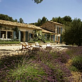 Blooming lavender bushes on the edge of a terrace of a Mediterranean country house