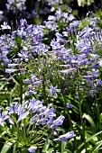 Wiesenblumen mit violetten Blüten