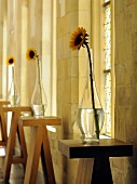 Sunflowers in vases on wooden bar tables in front of a natural stone wall